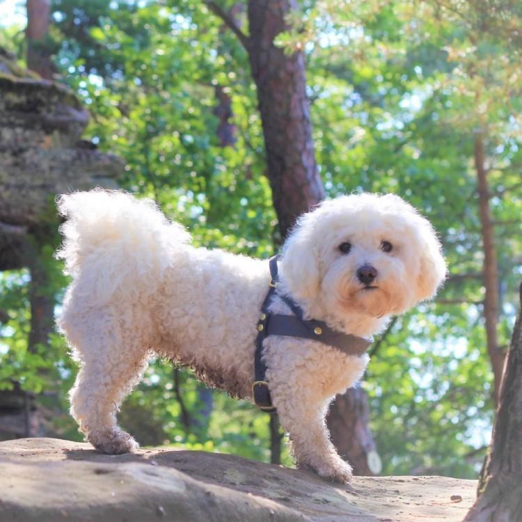butter-dog-harness-forest-green (2)
